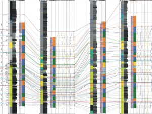 Integrated_Sequence_Stratigraphy_picture